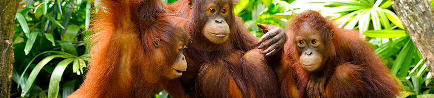 Say No To Palm Oil - Eco Earth Store 100% Palm Oil Free